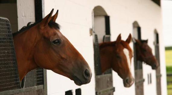Horses_Mermin_web
